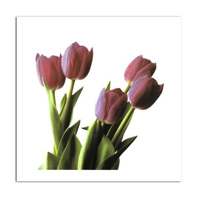 Affiche Tulipes roses